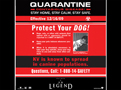 Protect your dog
